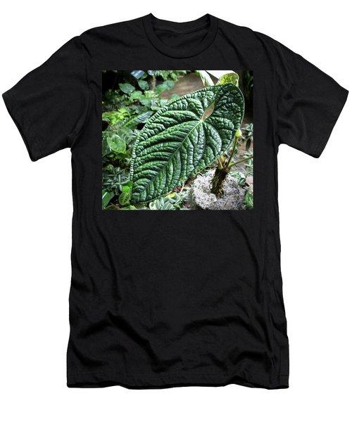 Texture Of A Leaf Men's T-Shirt (Athletic Fit)