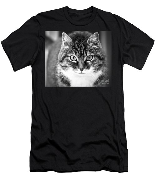 The Cat Stare Down Men's T-Shirt (Athletic Fit)