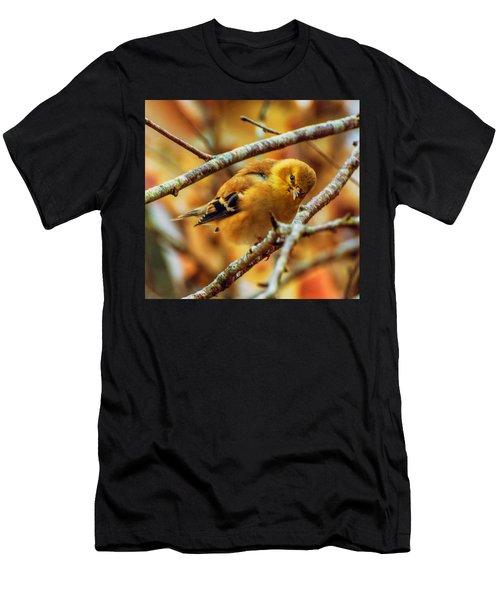 The Inquisitive Goldfinch Men's T-Shirt (Athletic Fit)