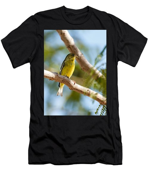 The Lesser Goldfinch Men's T-Shirt (Athletic Fit)