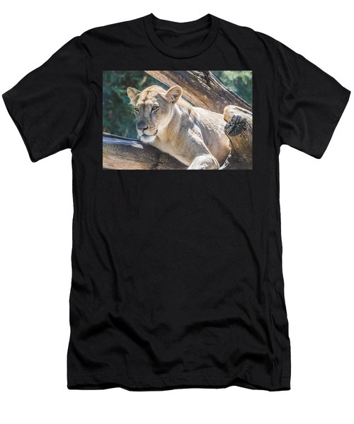 The Lioness Men's T-Shirt (Slim Fit) by David Collins