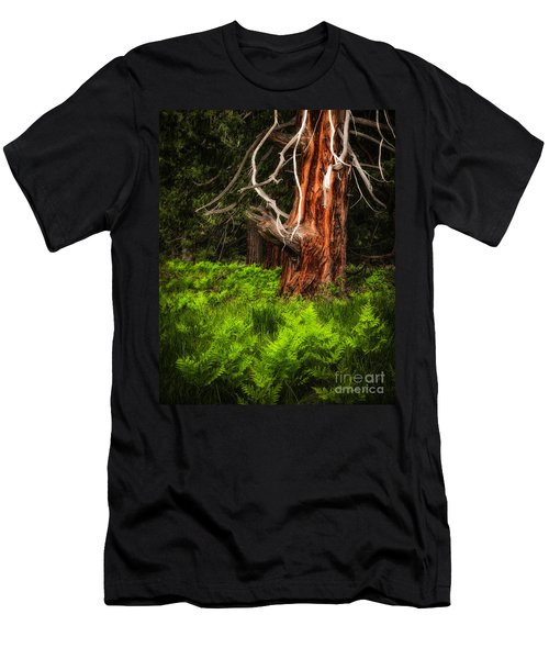 The Old Tree Men's T-Shirt (Athletic Fit)