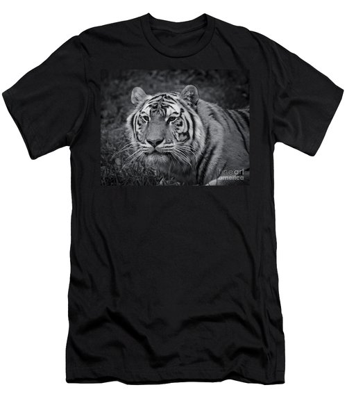 Tiger In The Grass Men's T-Shirt (Slim Fit) by Darcy Michaelchuk
