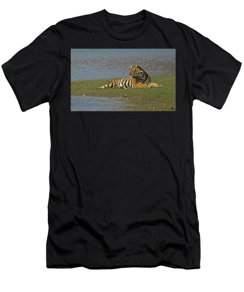 Tigress Men's T-Shirt (Athletic Fit)