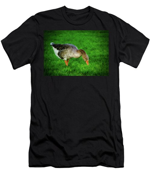 Toulouse Goose  Men's T-Shirt (Athletic Fit)
