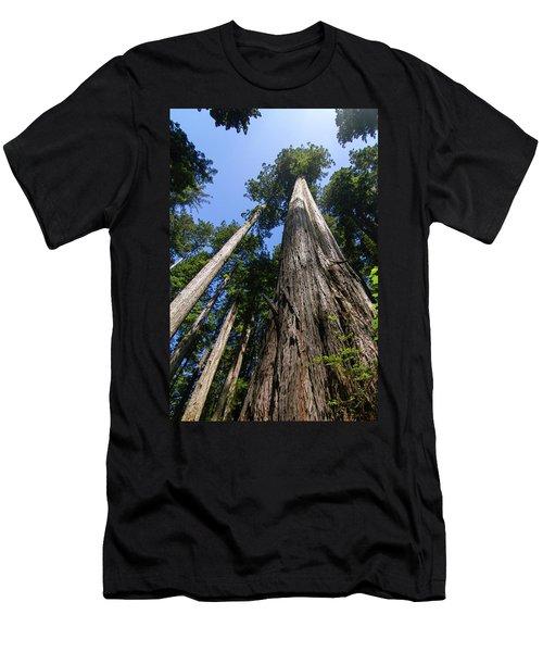 Towering Redwoods Men's T-Shirt (Athletic Fit)