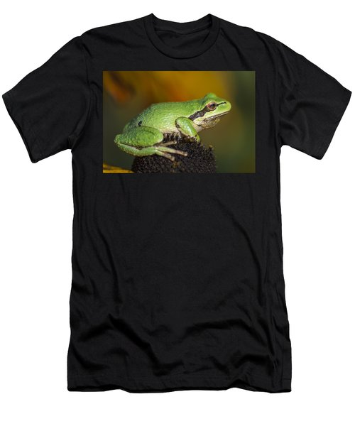 Treefrog On Rudbeckia Men's T-Shirt (Athletic Fit)