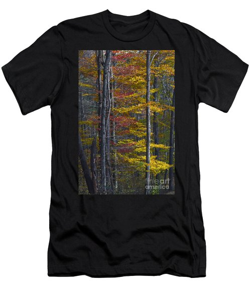 Trees With Autumn Colors 8260c Men's T-Shirt (Athletic Fit)