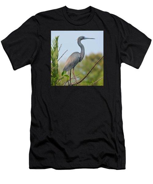 Tricolored Heron Men's T-Shirt (Athletic Fit)