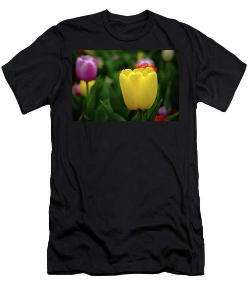 Tulips At Campus Men's T-Shirt (Athletic Fit)