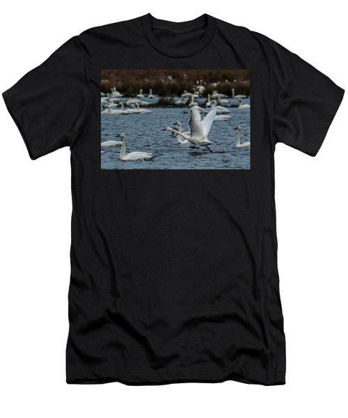 Tundra Swan And Liftoff Head Start Men's T-Shirt (Slim Fit)
