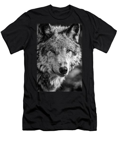 Tundra Wolf Men's T-Shirt (Athletic Fit)