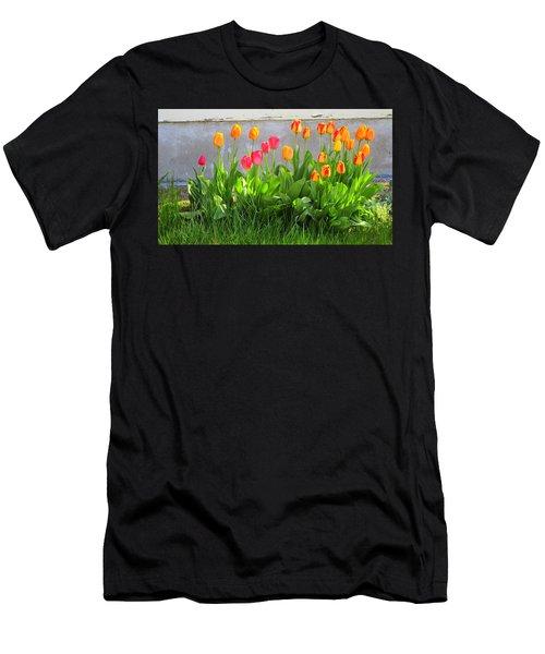 Twenty-five Tulips Men's T-Shirt (Athletic Fit)