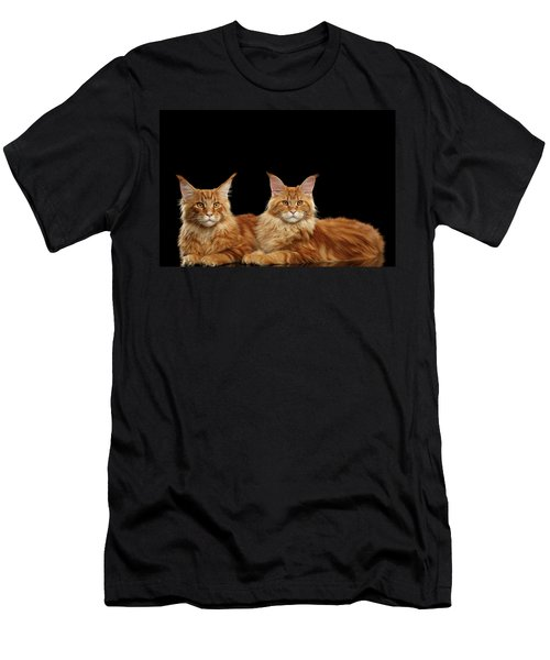 Two Ginger Maine Coon Cat On Black Men's T-Shirt (Athletic Fit)