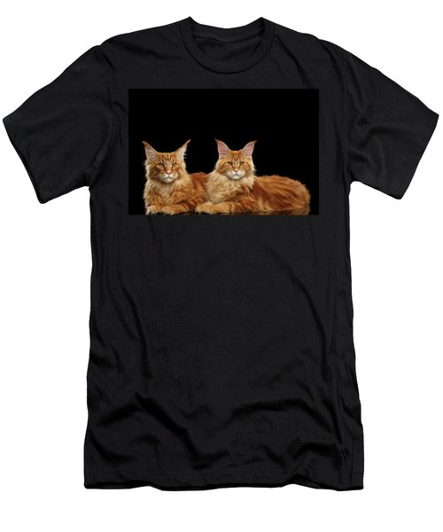 Men's T-Shirt (Athletic Fit) featuring the photograph Two Ginger Maine Coon Cat On Black by Sergey Taran
