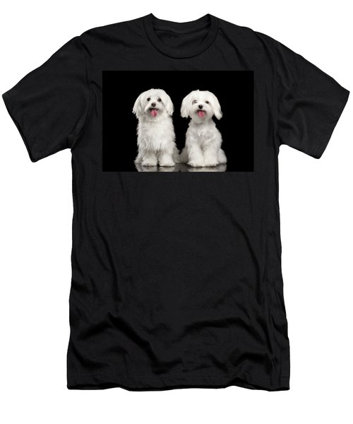 Two Happy White Maltese Dogs Sitting, Looking In Camera Isolated Men's T-Shirt (Athletic Fit)