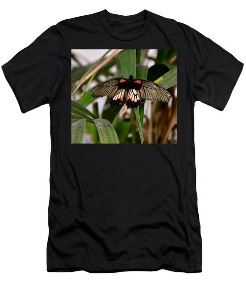 Vibrant Butterfly Men's T-Shirt (Athletic Fit)
