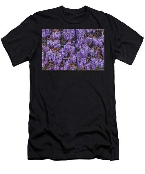 Wall Of Wisteria Men's T-Shirt (Athletic Fit)