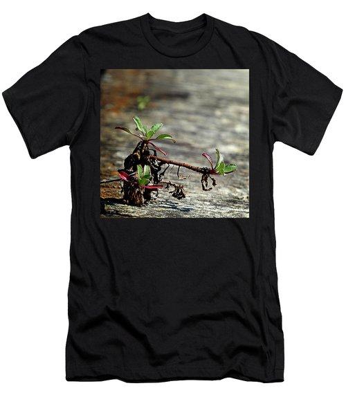 Wall Vegetation Men's T-Shirt (Athletic Fit)