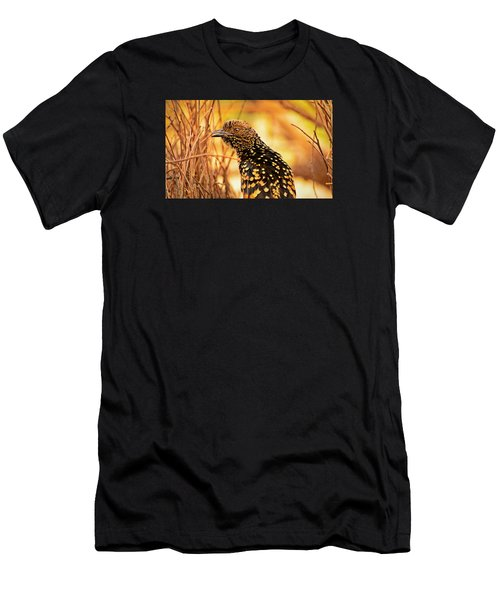 Western Bowerbird Men's T-Shirt (Athletic Fit)