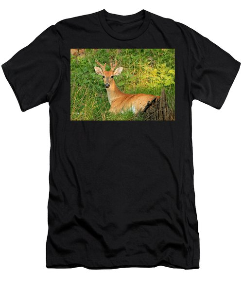 White-tail Buck Resting Men's T-Shirt (Athletic Fit)