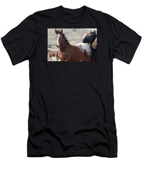 Wild Appaloosa Mustang Horse Men's T-Shirt (Athletic Fit)