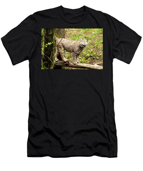 Wild Bobcat In Mountain Setting Men's T-Shirt (Athletic Fit)