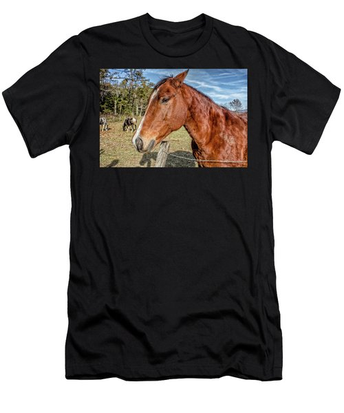 Wild Horse In Smoky Mountain National Park Men's T-Shirt (Athletic Fit)