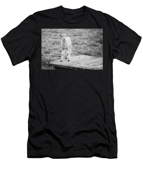 Williamsburg Lamb Men's T-Shirt (Athletic Fit)