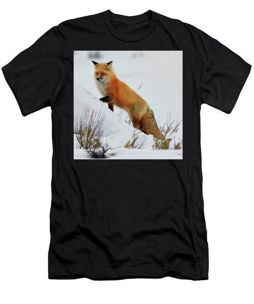 Winter Fox Men's T-Shirt (Athletic Fit)