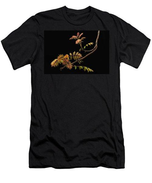 Wisteria Colors Men's T-Shirt (Athletic Fit)