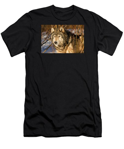 Wolf In Brush Men's T-Shirt (Athletic Fit)