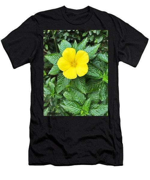 Yellow Alder Blossom Men's T-Shirt (Athletic Fit)