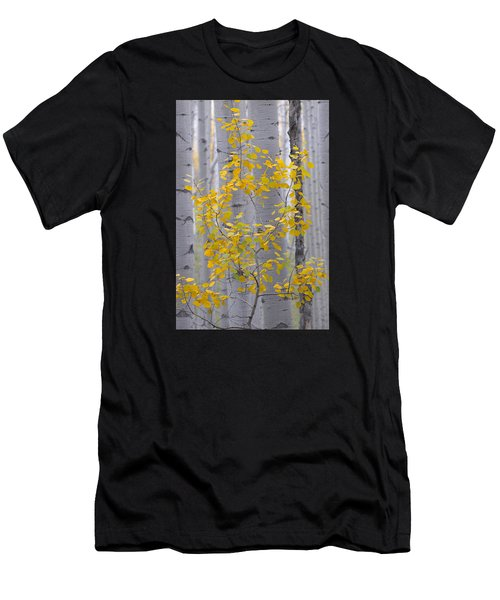 Yellow Aspen Tree Men's T-Shirt (Athletic Fit)