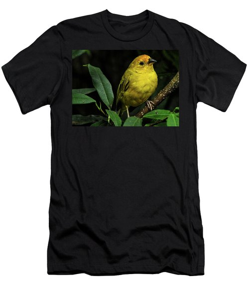 Men's T-Shirt (Athletic Fit) featuring the photograph Yellow Bird by Pradeep Raja Prints