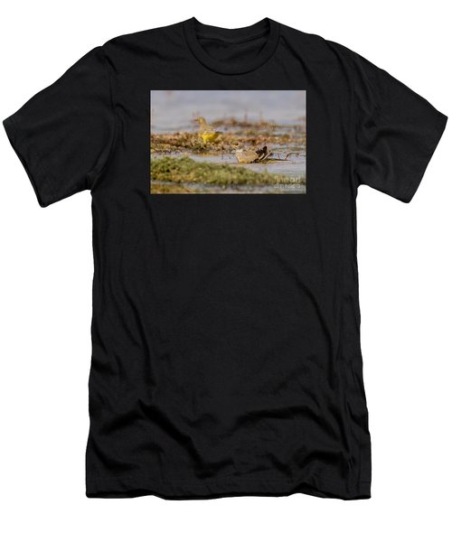 Yellow Crowned Wagtail Juvenile Bath Time Men's T-Shirt (Athletic Fit)
