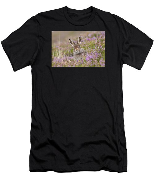 Young Mountain Hare In Purple Heather Men's T-Shirt (Athletic Fit)