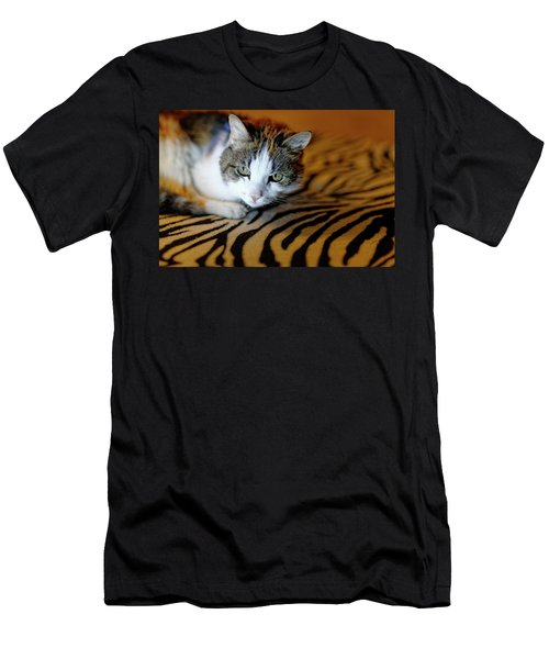 Zebra Cat Men's T-Shirt (Athletic Fit)