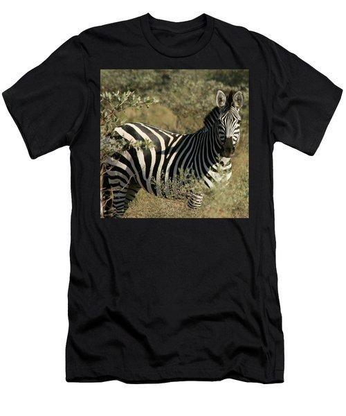 Zebra Portrait Men's T-Shirt (Athletic Fit)