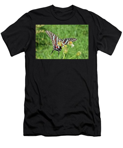 Zebra Swallowtail And Ladybug Men's T-Shirt (Athletic Fit)