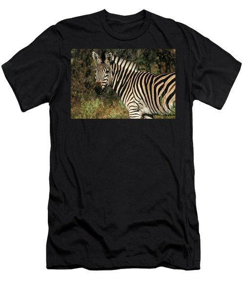 Zebra Watching Men's T-Shirt (Athletic Fit)