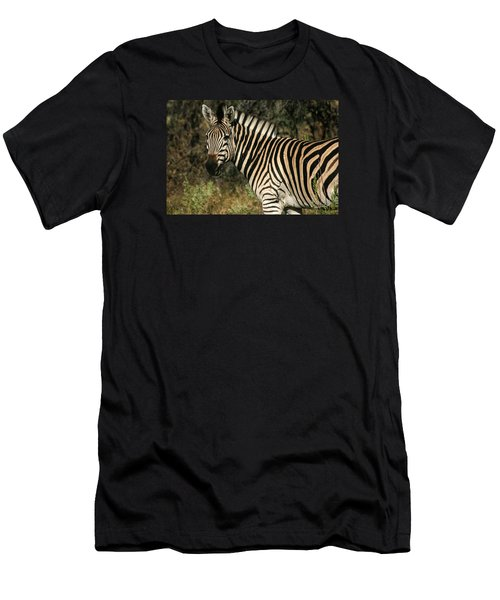 Zebra Watching Men's T-Shirt (Athletic Fit)
