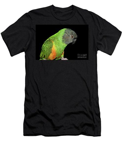 Senegal Parrot Men's T-Shirt (Athletic Fit)