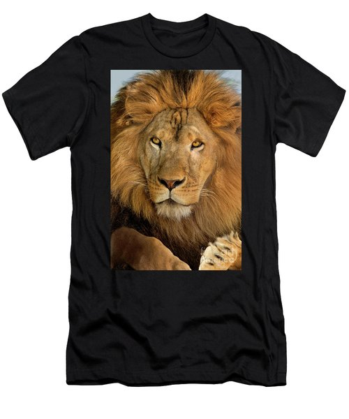 656250006 African Lion Panthera Leo Wildlife Rescue Men's T-Shirt (Athletic Fit)