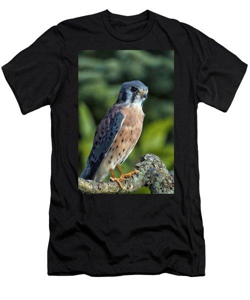 American Kestrel 9251501 Men's T-Shirt (Athletic Fit)