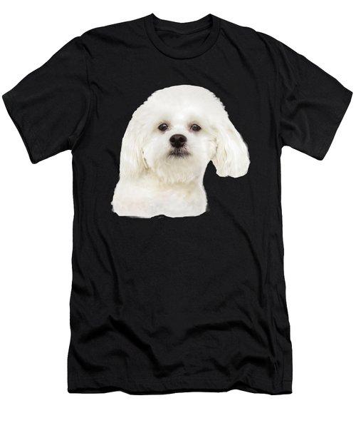 Maltese Puppy Men's T-Shirt (Athletic Fit)
