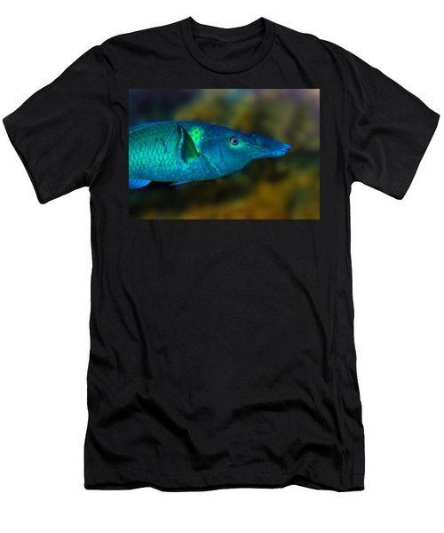 Bird Wrasse Men's T-Shirt (Athletic Fit)