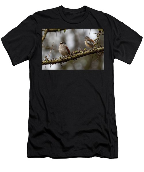Black-crowned Tchagra And White-browed Scrub-robin Men's T-Shirt (Athletic Fit)
