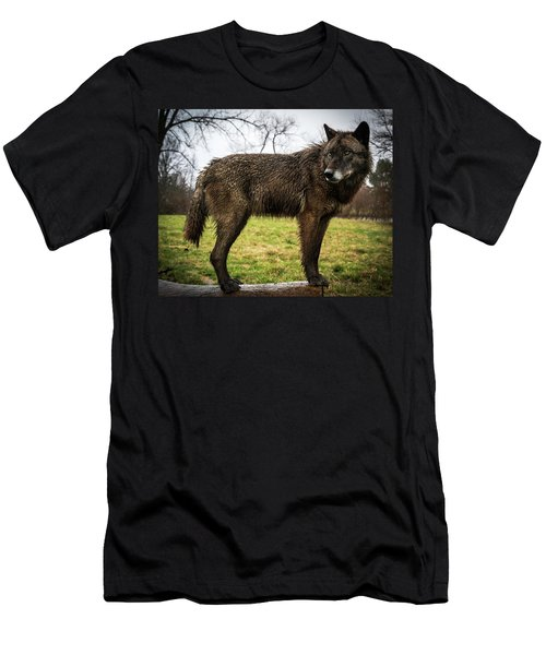 Black Wolf Men's T-Shirt (Athletic Fit)