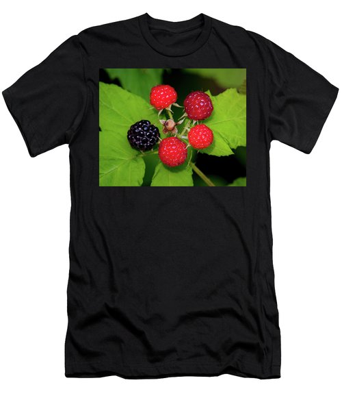 Men's T-Shirt (Athletic Fit) featuring the photograph Blackberries by Jeff Phillippi
